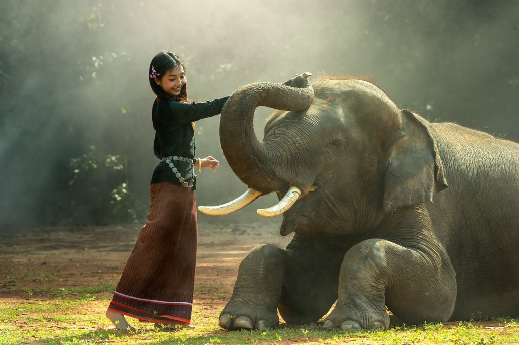 Traitement des élephants en Thaïland