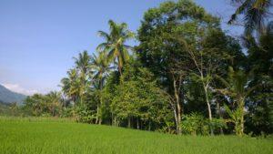 L'aspect de la végétation à Madagascar