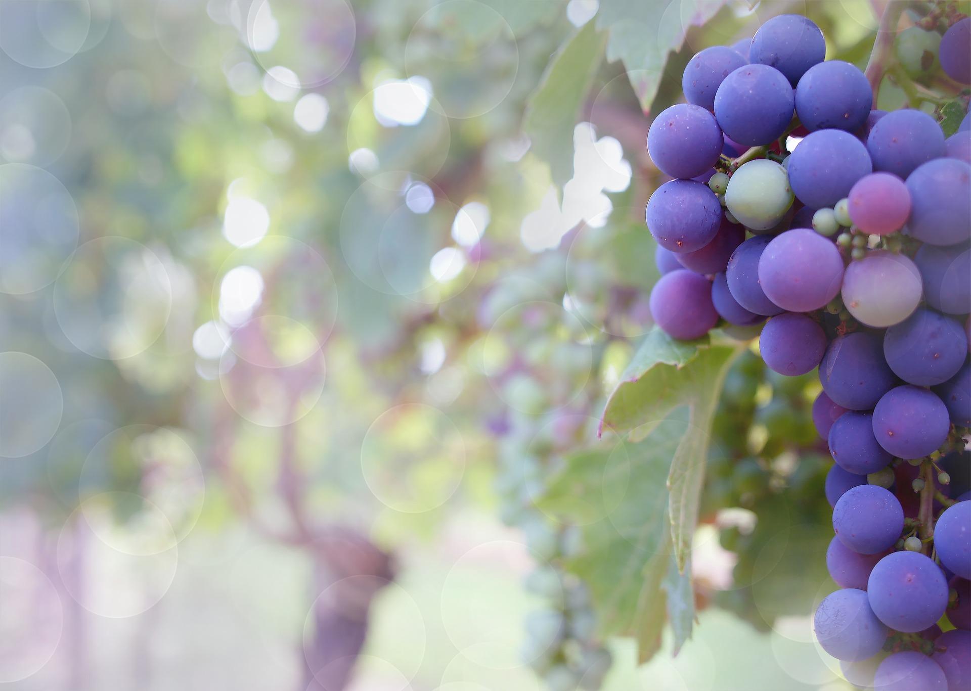 Pays viticole: Dégustation et visite